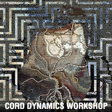 Cord Dynamics Workshop