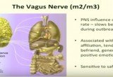 Strengthen your Vagal Nerve with Compassion